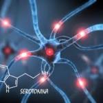 Serotonina: cos'è e come stimolare l'ormone della felicità