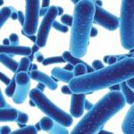 Con I Probiotici Aumenta Il Buon Umore